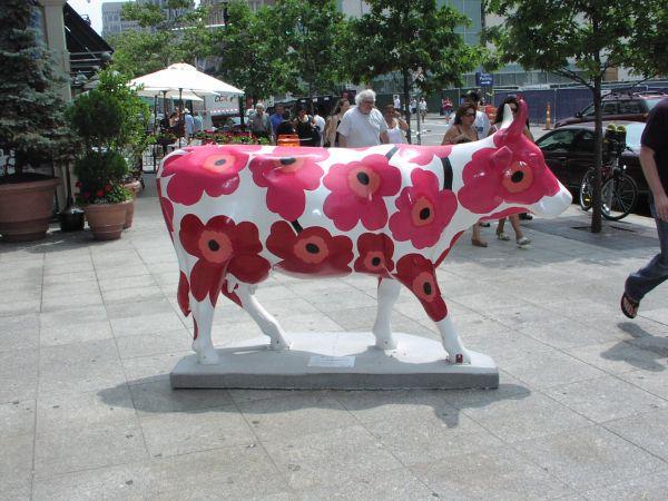 Boston-cow
