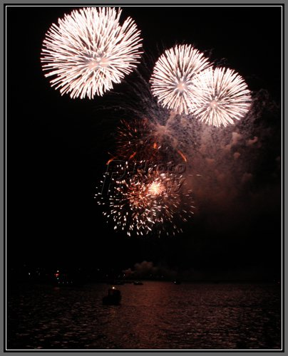 White-firework-flowers