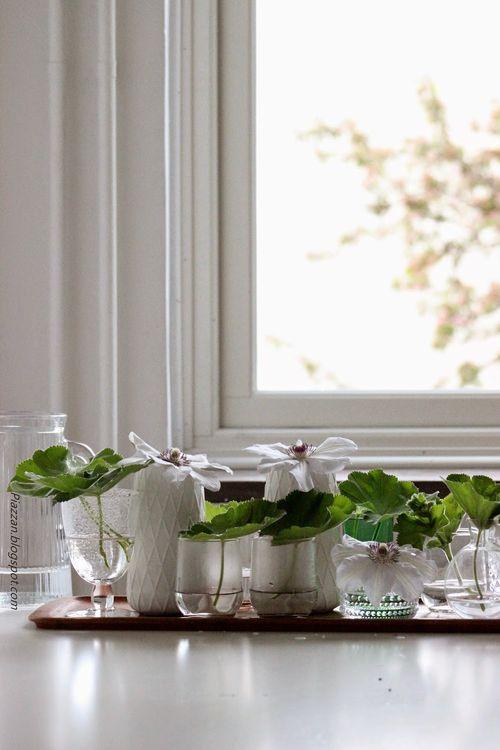 Blommor-klematis-daggkåpa-dekoration-piazzan